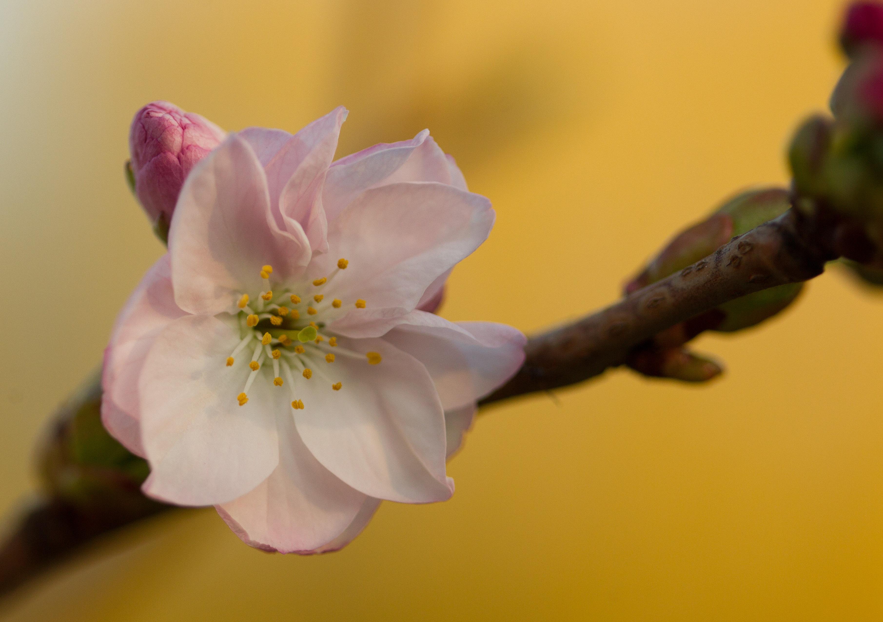 Kilka nowych drzew pojawiło się w Parku Traugutta, a to wszystko żeby zwiększyć różnorodność tego miejsca. Rosną już wiśnie piłkowane, katalpa, magnolie i grab kolumnowy.