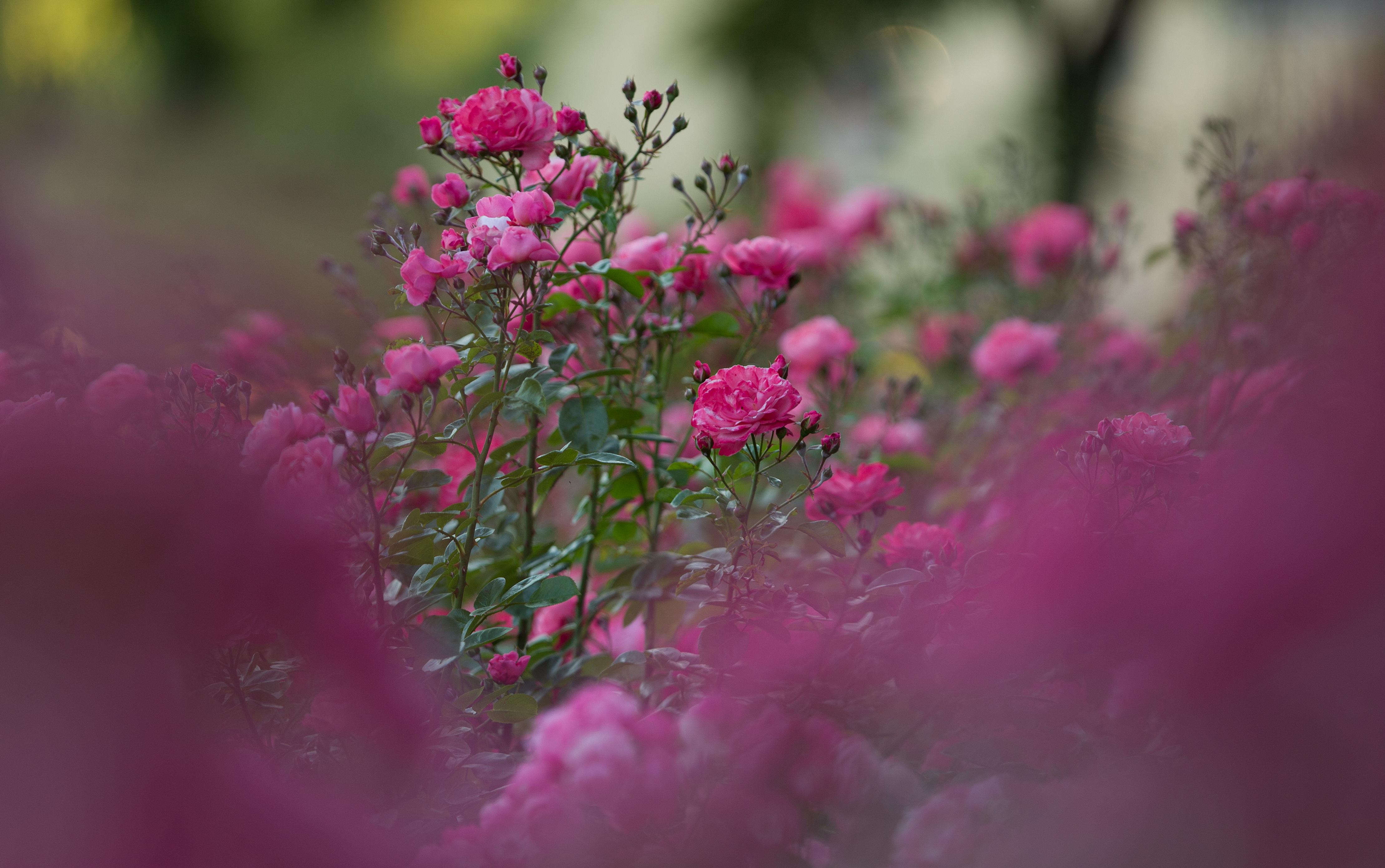 Mein schöner Garten / Park Traugutta