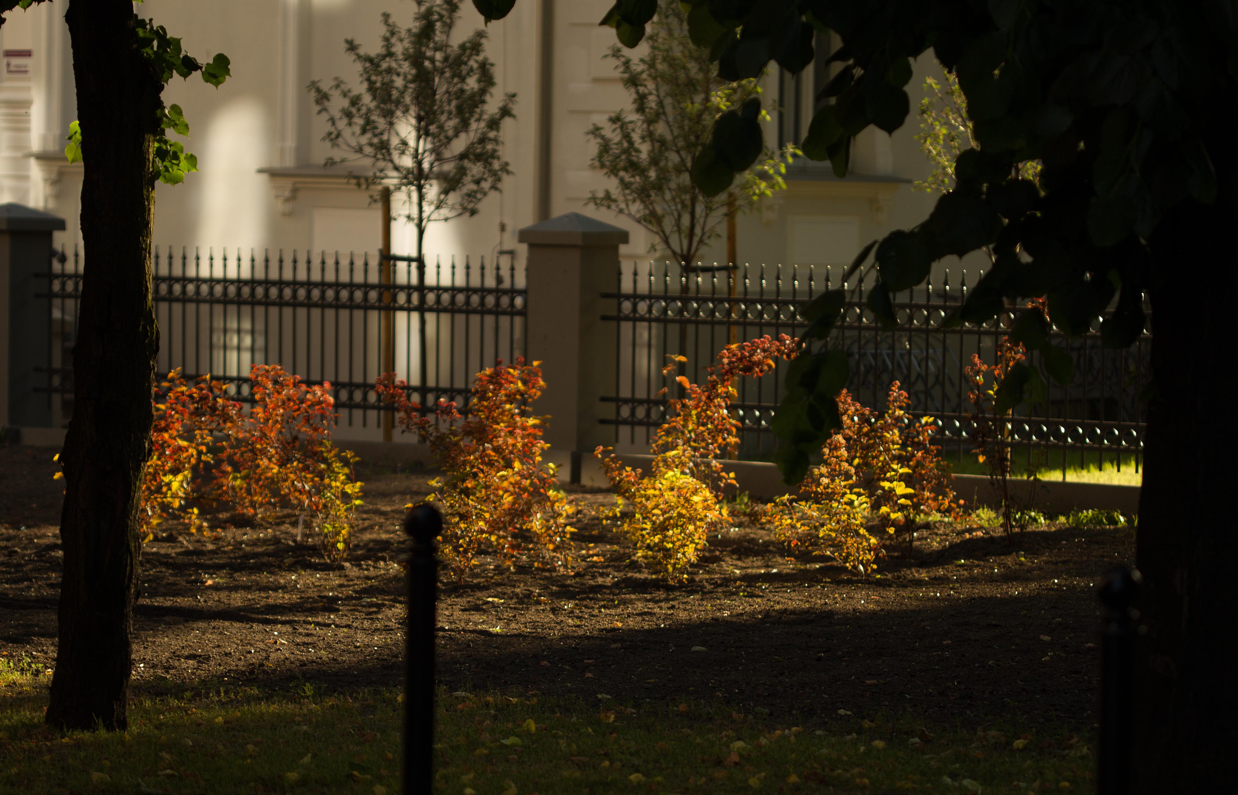 """Nowe nasadzenia po """"komórkach"""" na terenie parku - rosną tam hortensje, pęcherznice i bzy."""