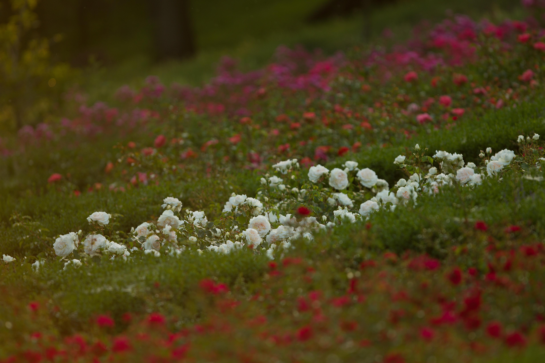 Rabata w Parku Traugutta