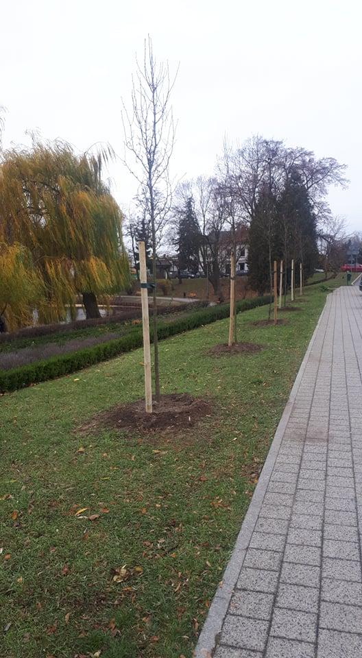 Grusze Chanticleer pojawiły się w Parku Traugutta oraz na ul. Jana Pawła II