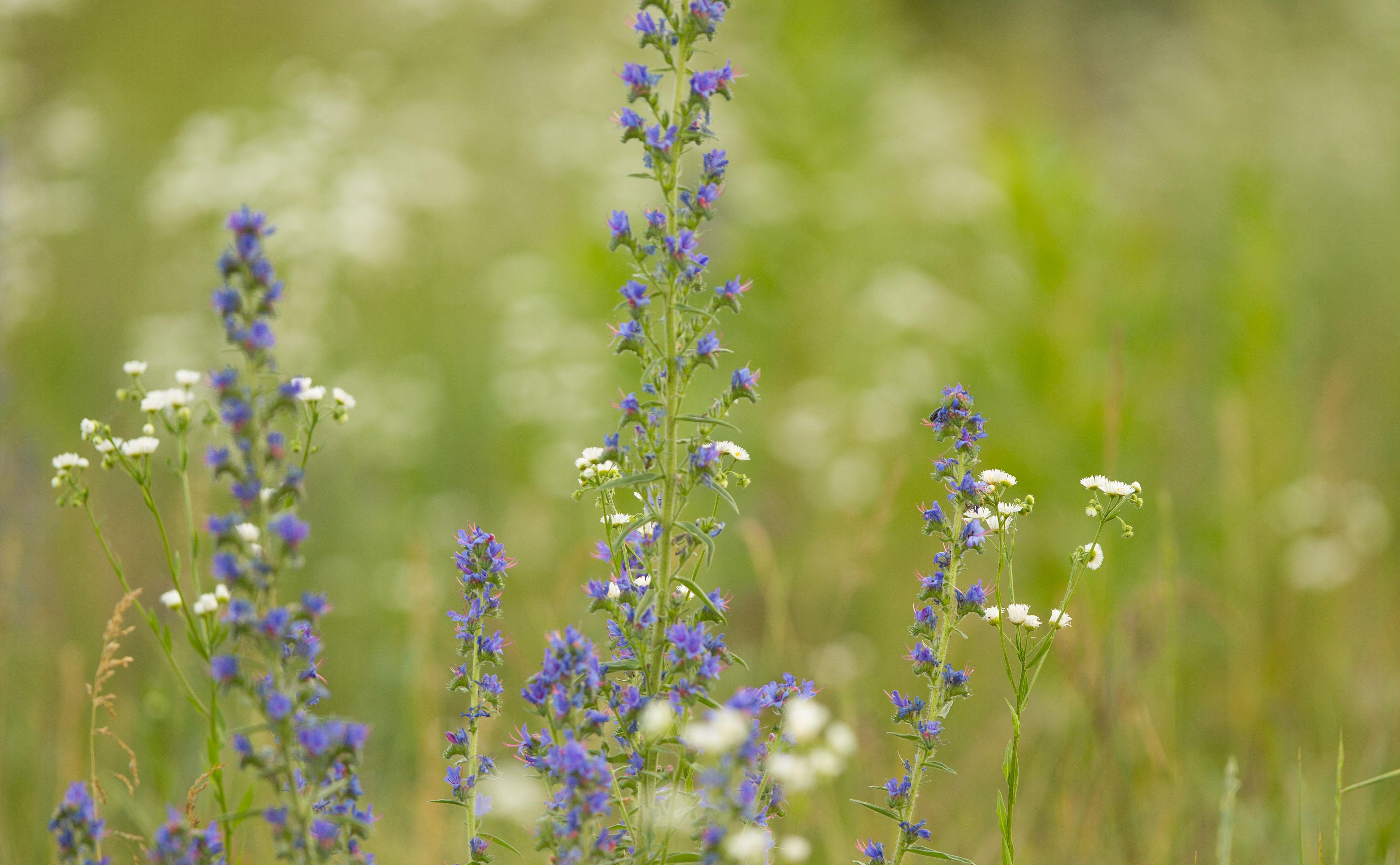 Między Szkołą Podstawową nr 7 i Żłobkiem jesienią założona została łąka kwietna.